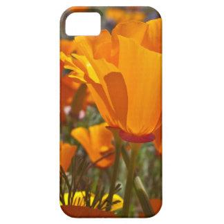 Bright orange california poppies iPhone SE/5/5s case