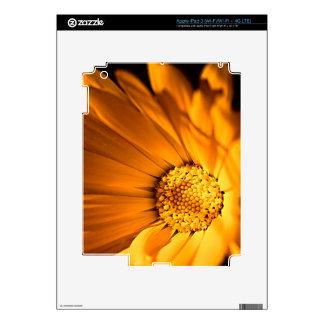 Bright Orange Daisy Wildflower Decals For iPad 3