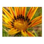 Bright Orange Flower Post Card