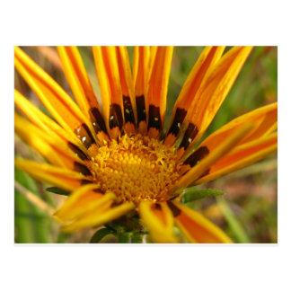 Bright Orange Flower Postcard