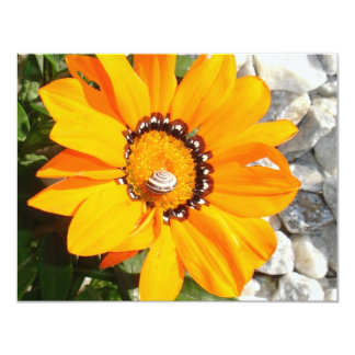 Bright Orange Gazania Flower with Snail Card