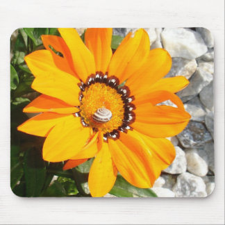 Bright Orange Gazania Flower with Snail Mouse Pads