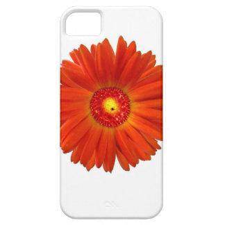 Bright Orange Gerbera Daisy iPhone 5 Covers