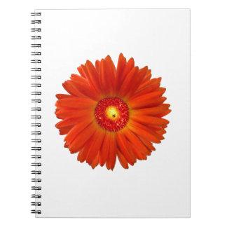 Bright Orange Gerbera Daisy Notebooks