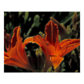 Bright Orange Lilies Print