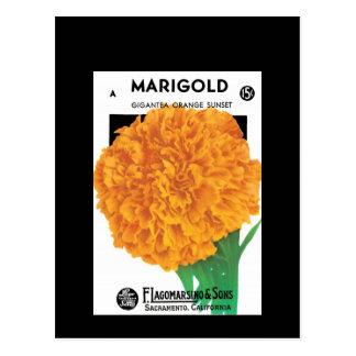 Bright Orange Marigold Postcard