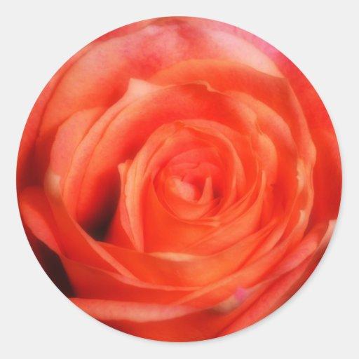 Bright Orange Rose Stickers