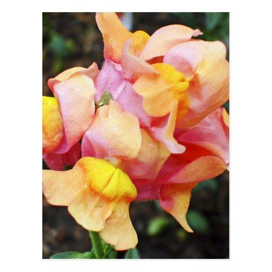 Bright Orange Snapdragon Flowers Postcard