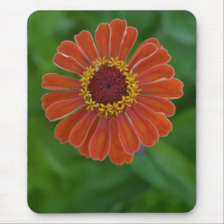 Bright Orange Zinnia Flower Blossom mousepad