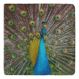 Bright Peacock Bird with Royal Plumage Trivet
