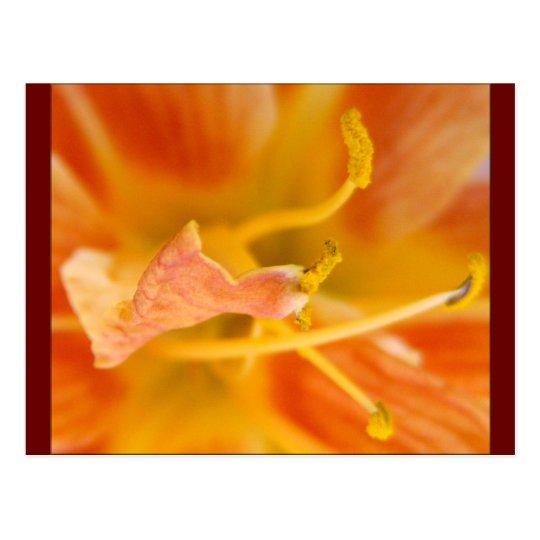 Bright Petals Postcard