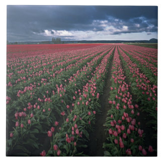 Bright pink and red tulips glow under dark ceramic tile