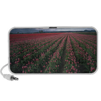 Bright pink and red tulips glow under dark travel speakers