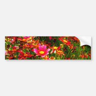 Bright pink and yellow Daisy Wild flowers Bumper Sticker