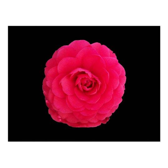 Bright Pink Camellia Postcard