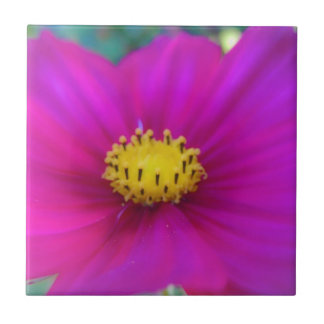 Bright Pink Cosmo Tile