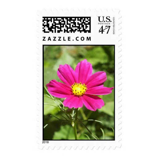 Bright Pink Cosmos Postage Stamp