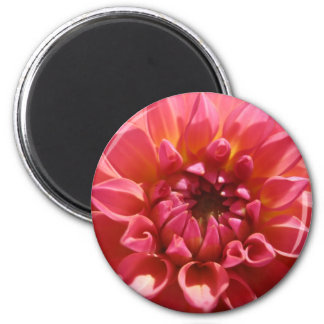 Bright Pink Dahlia Magnets