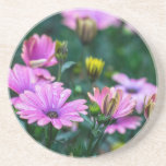 Bright Pink Daisy Flowers Drink Coaster