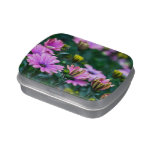 Bright Pink Daisy Flowers Jelly Belly Candy Tins