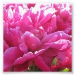 Bright Pink Endless Peony Flowers Photo Art