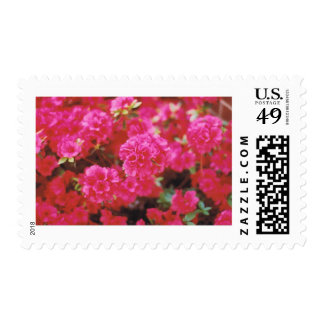 Bright Pink Floral Stamps