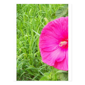 Bright Pink Flower in Tall Grass Post Cards