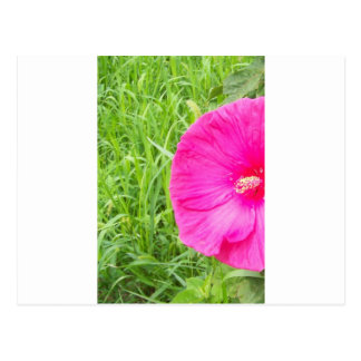 Bright Pink Flower in Tall Grass Postcard