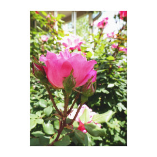 bright,pink,flowers,floral,photography,picture,ima canvas print