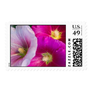 Bright Pink Hibiscus Flowers Postage