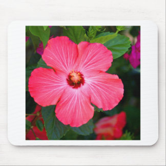 Bright Pink Hibiscus Mouse Pad