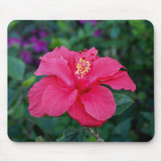 Bright Pink Hibiscus Photo Mouse Pad