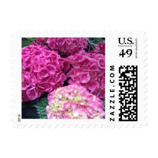 Bright Pink Hydrangea Flowers Postage Stamp