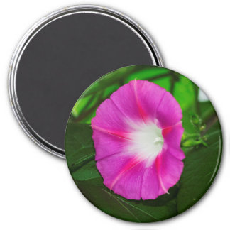 Bright Pink Morning Glory Flower Magnet