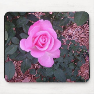 Bright Pink Rose Gifts and Merchandise Mouse Pad