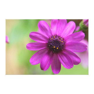Bright Pink To Purple Flower Canvas Print
