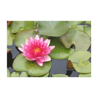 Bright Pink Water Lily Flower Canvas Print