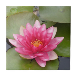 Bright Pink Water Lily Flower Ceramic Tile