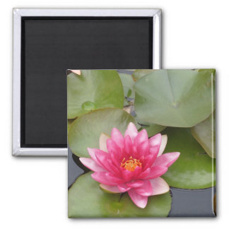 Bright Pink Water Lily Flower Magnet
