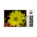 Bright Postage Stamp