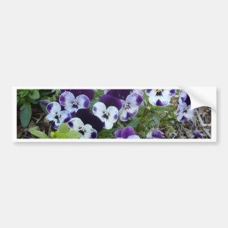 Bright_Purple_And_White_Pansies,_ Bumper Sticker