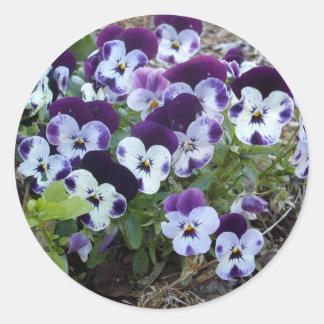 Bright_Purple_And_White_Pansies,_ Classic Round Sticker