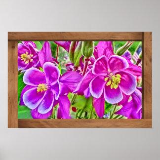 Bright purple Colorado columbine flowers poster