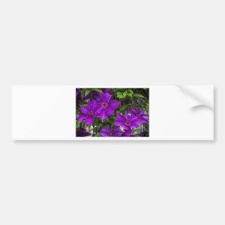 Bright Purple Jackmanii Clematis Vine Bumper Sticker