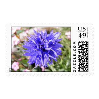 Bright Purple Wildflower Postage Stamp