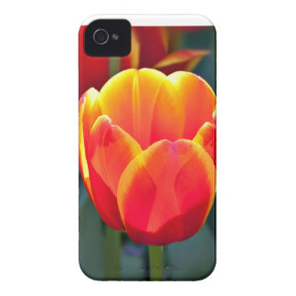Bright red and yellow tulip bloom on green Case-Mate blackberry case