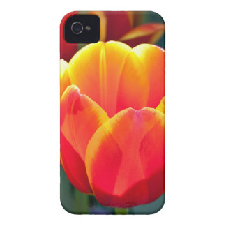 Bright red and yellow tulip bloom on green Case-Mate iPhone 4 case