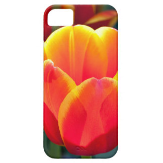 Bright red and yellow tulip bloom on green iPhone SE/5/5s case