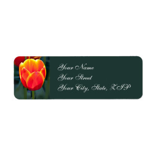 Bright red and yellow tulip bloom on green label