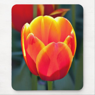 Bright red and yellow tulip bloom on green mouse pad